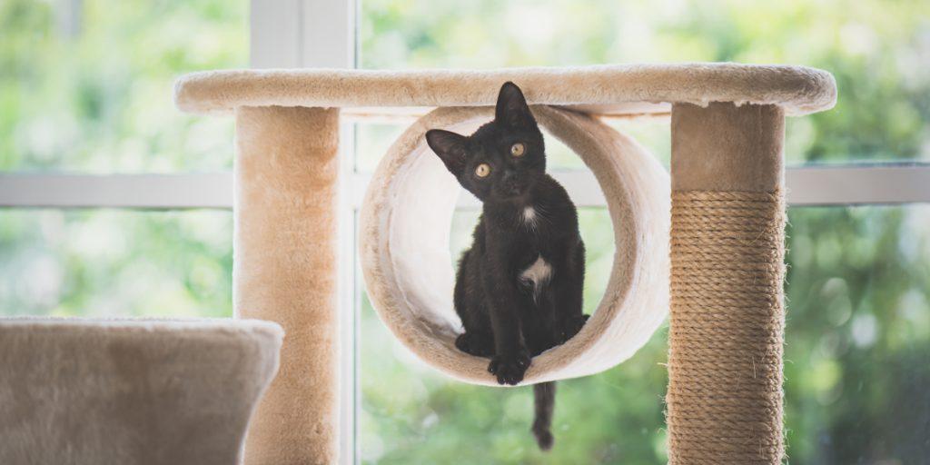 Cat Activity Centres