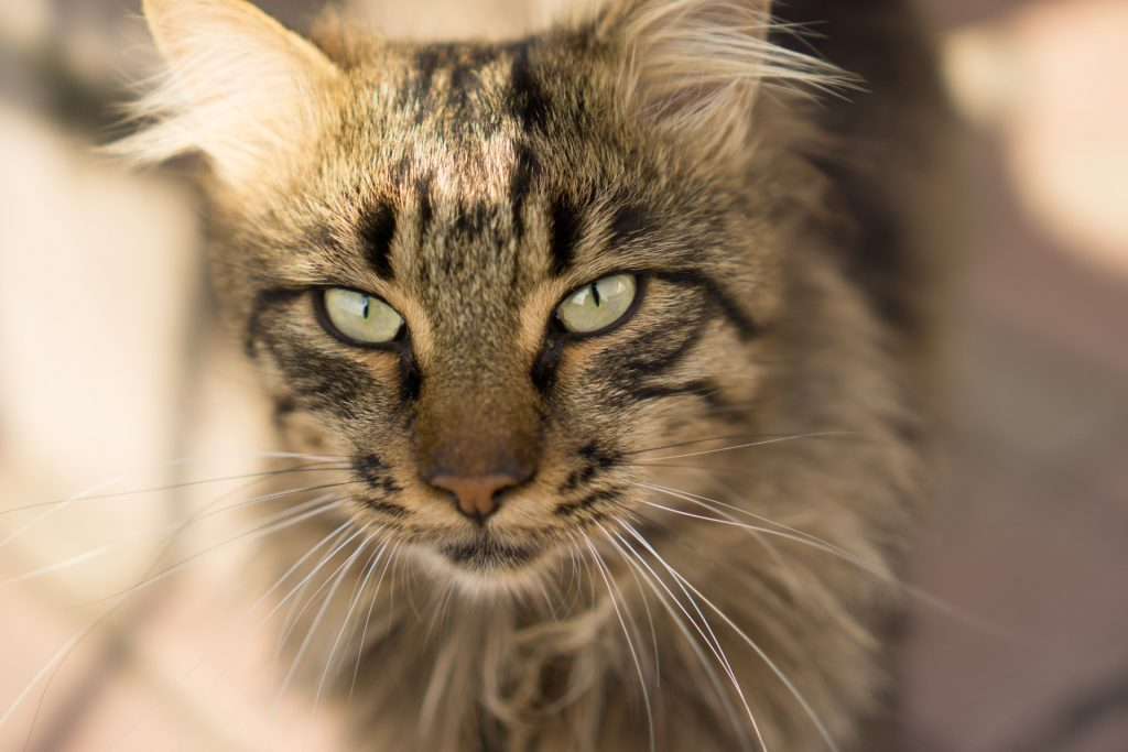Awesome looking cat