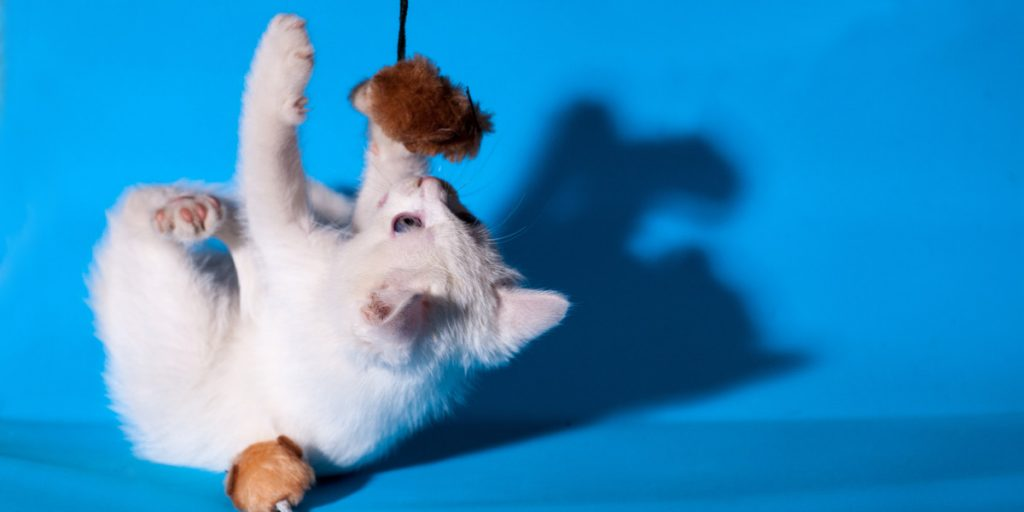 Cat Toy Reviews
