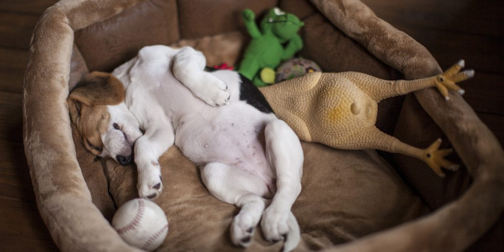 The Best Dog Bed Reviews