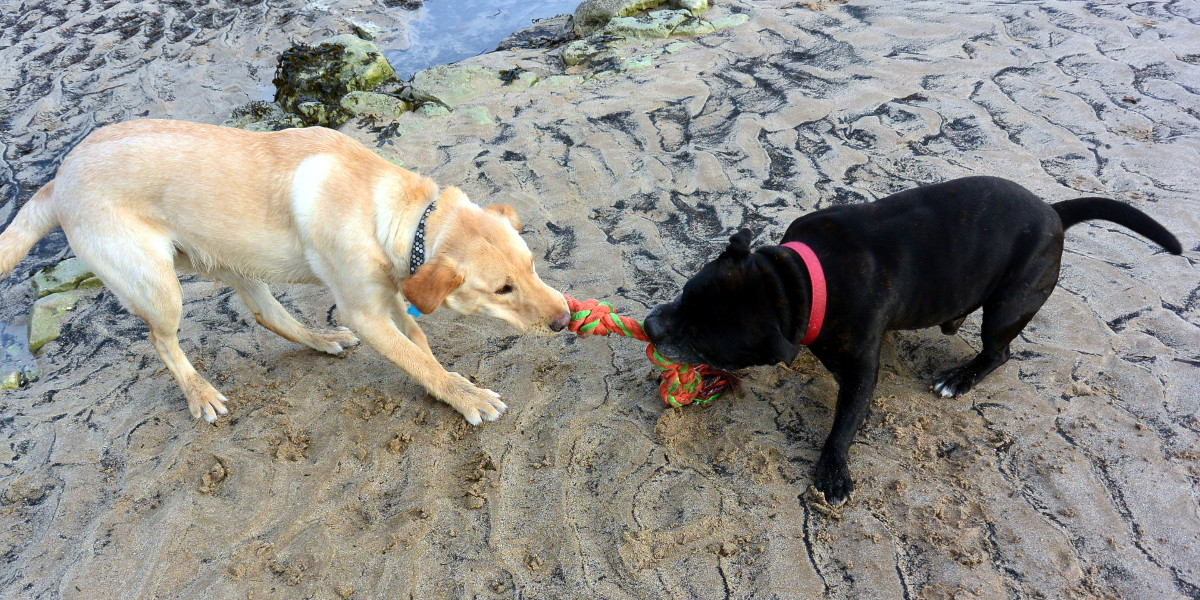 Dog Rope Toy Reviews