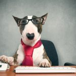 Which Dog Breed is Best for First Time Dog Owners?