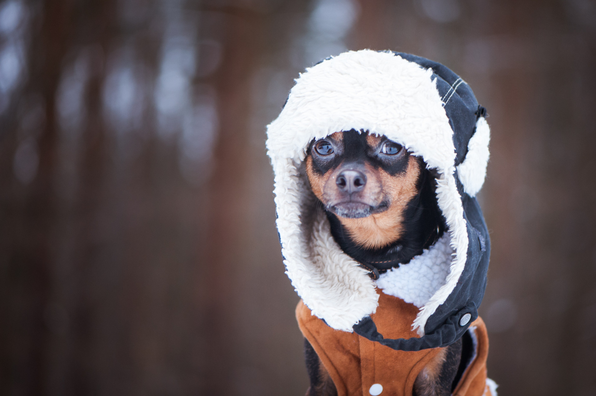 The Best Dog Coat Reviews