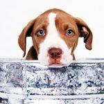 Tips for buying a new puppy
