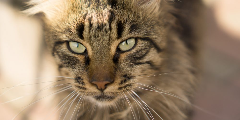 Why Cats Make the Best Pets