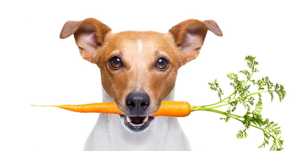 14 Health Benefits of Owning a Dog