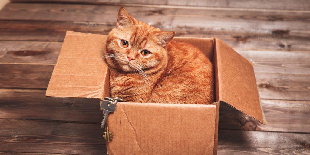 Cat House Reviews