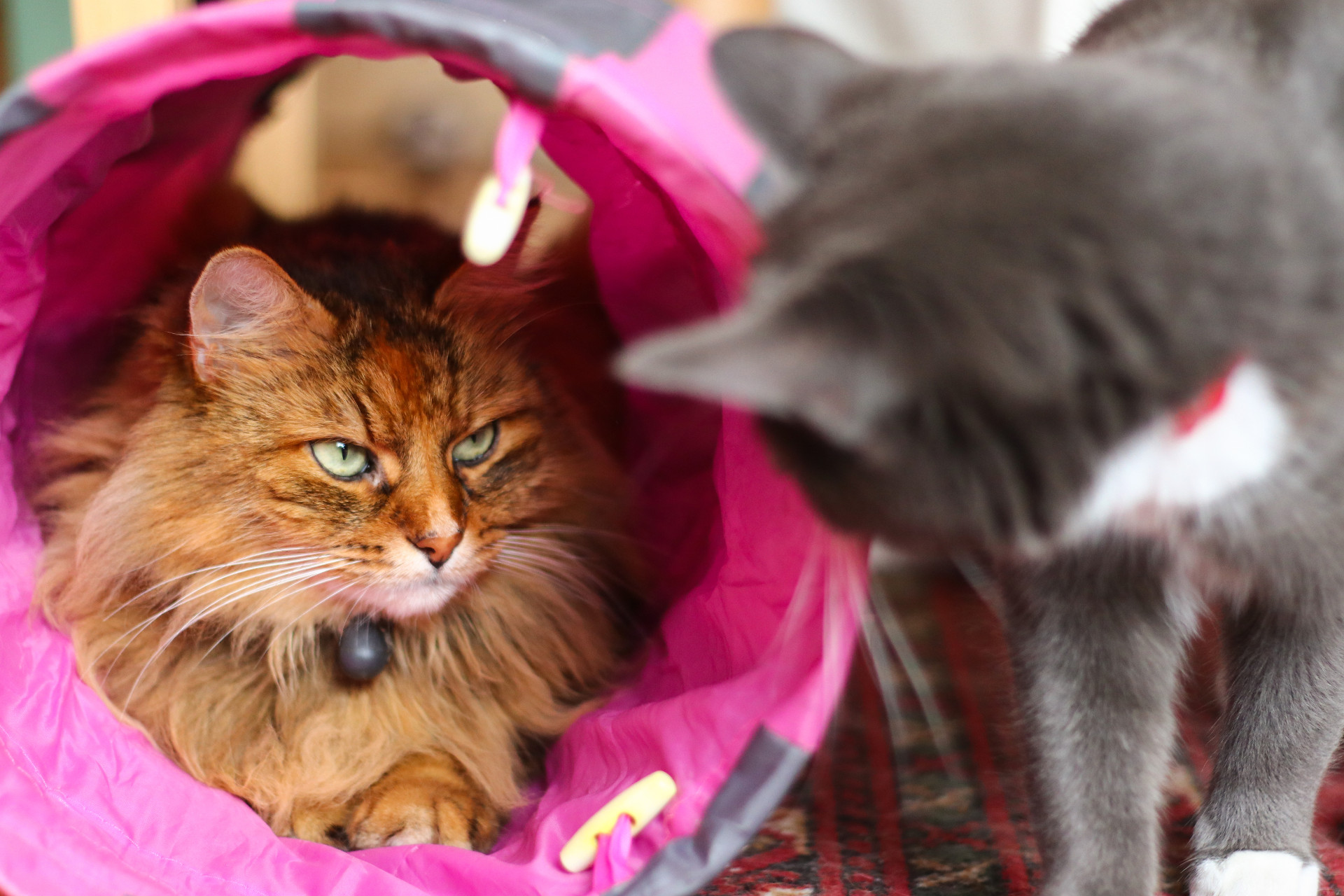 Best Cat Play Tunnels