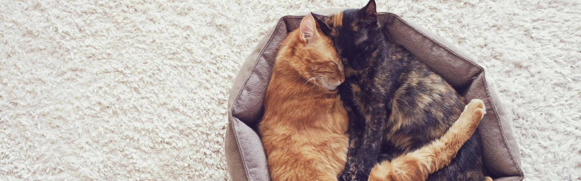 Picture of: The Best Cat Bed Reviews Pet Toy Uk 2020