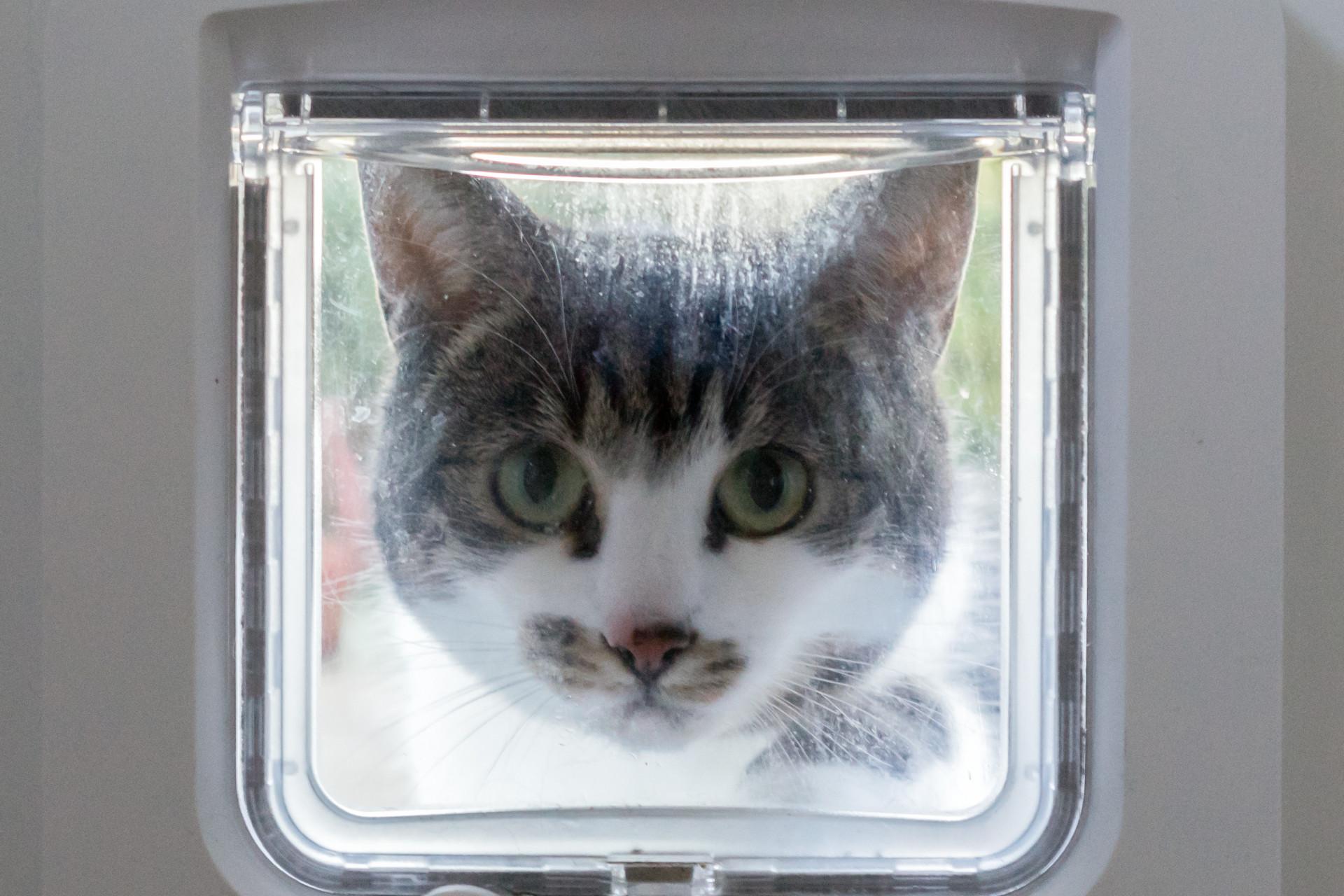 Best Microchip Cat Flaps