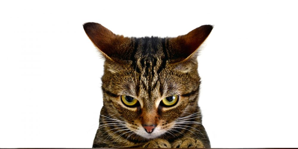 What are the signs of stress in a cat?