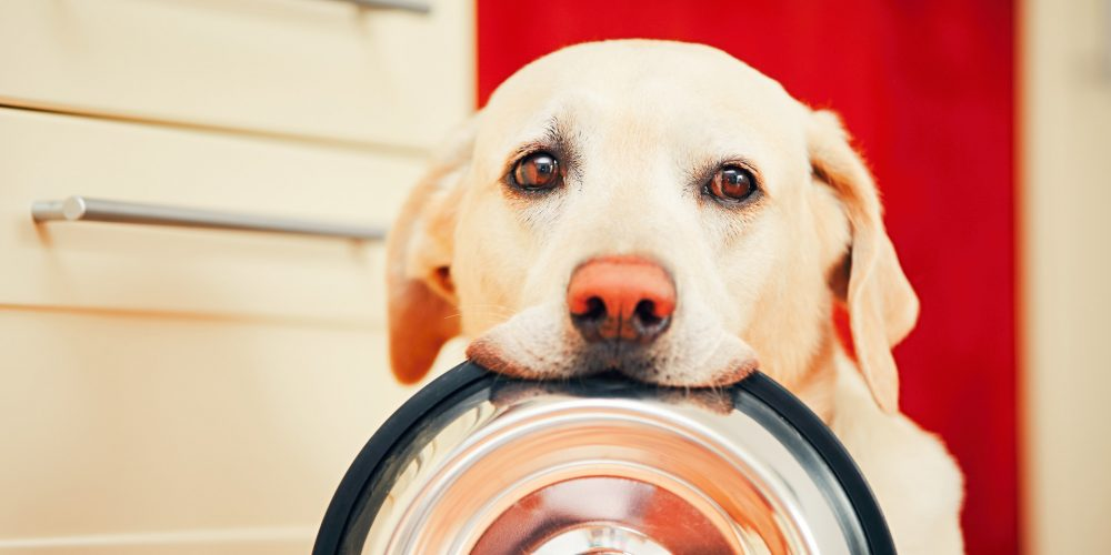 Tips for adopting a rescue dog