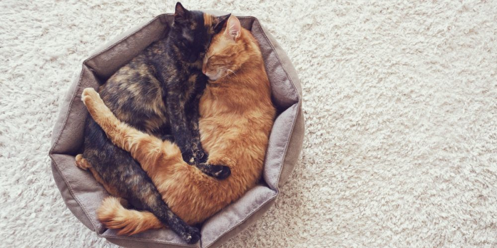 The Best Cat Beds