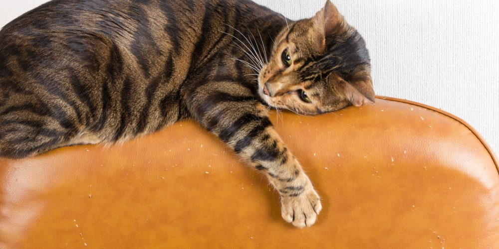 Why do cats scratch the furniture?