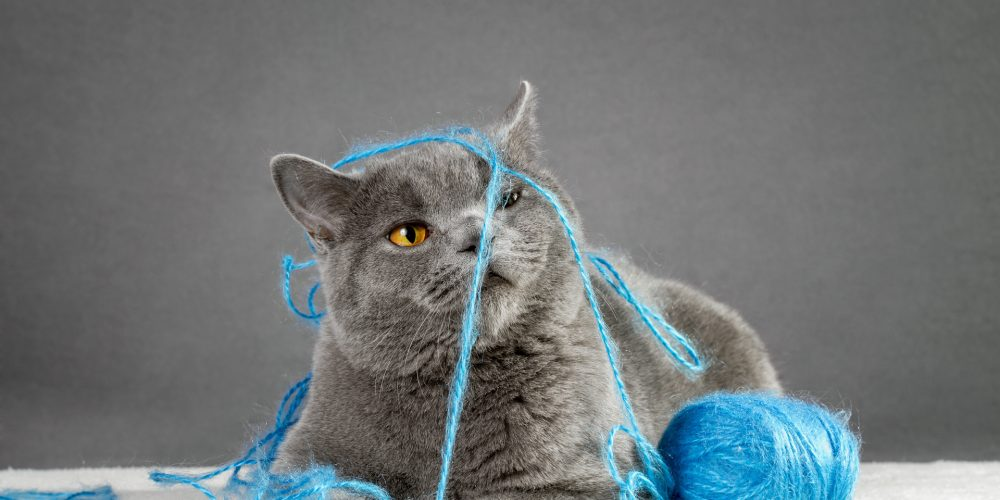 Choosing the best toy for your cat