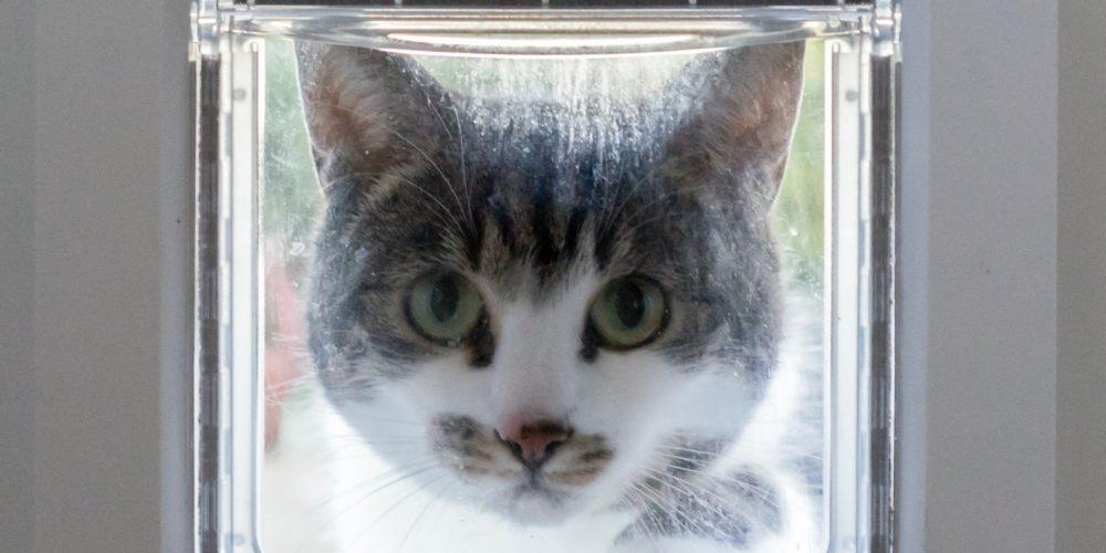 The Best Microchip Cat Flaps