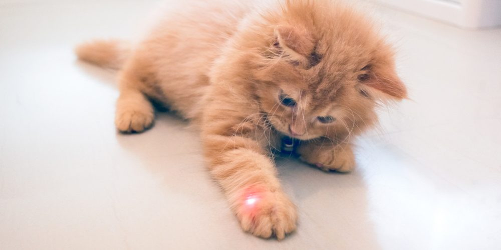 Are laser toys bad for cats?