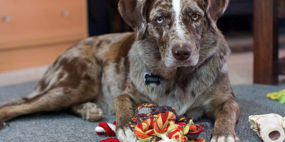 Why do dogs get possessive over toys?