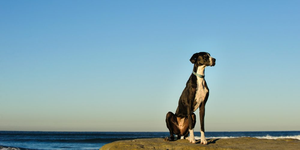 Why do dogs make the best pets?
