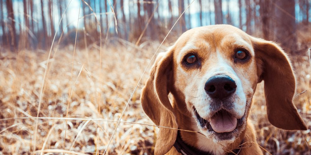 The Best GPS Tracking Collars for Dogs
