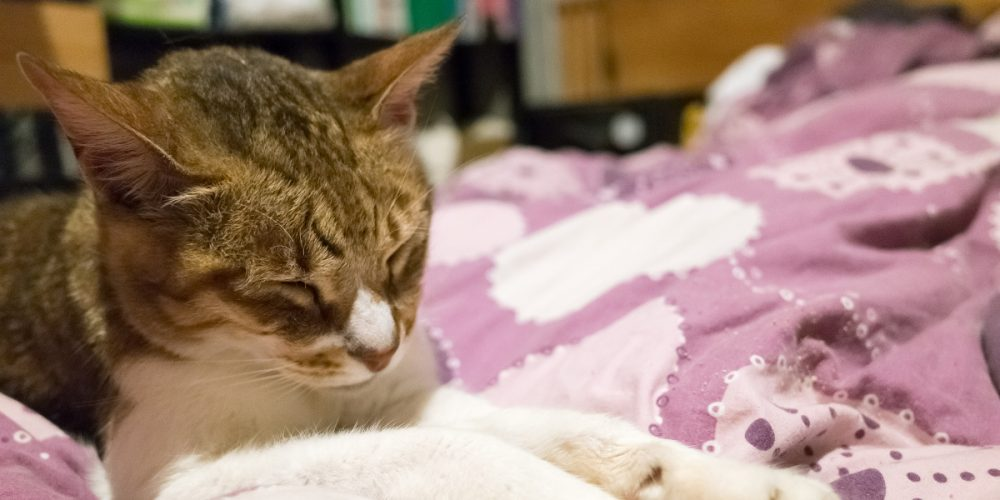 6 top tips to help you care for a senior cat