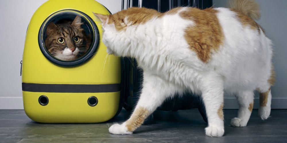 Are cat backpacks cruel?