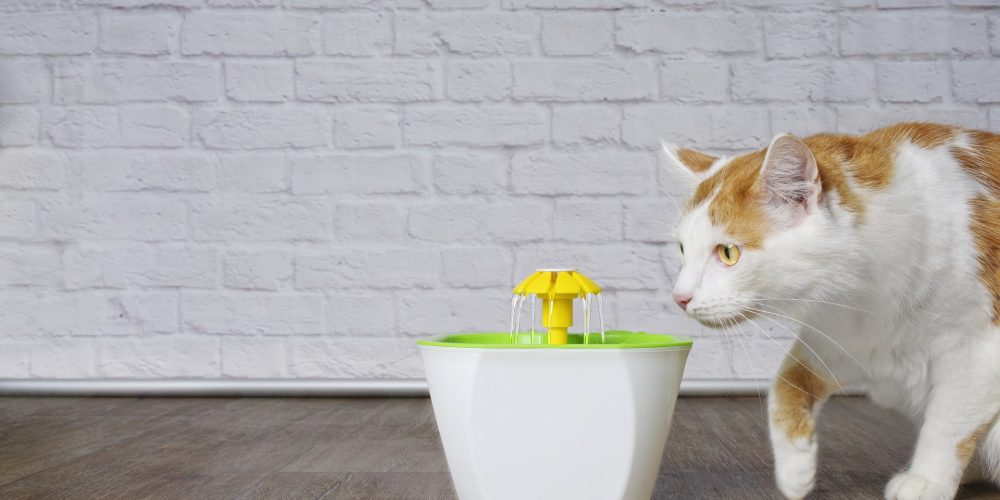 The Best Cat Water Fountains