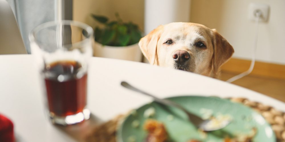 7 foods you should never feed your dog