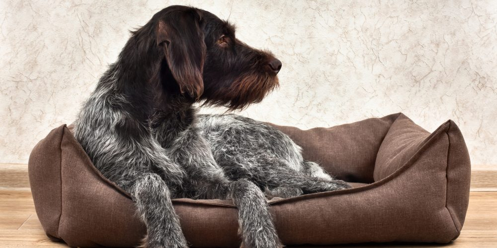 The Best Orthopedic & Memory Foam Dog Beds