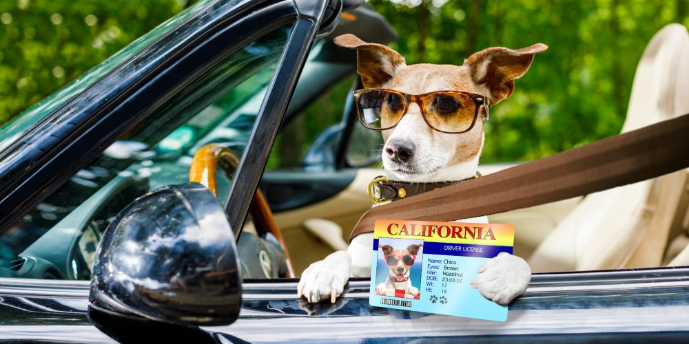 What happens to dogs when left in hot cars?