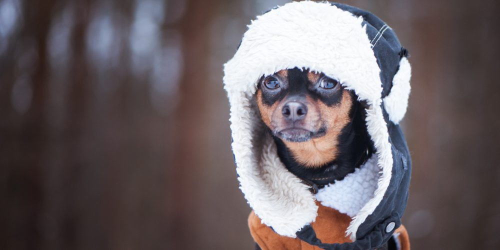 The Best Dog Coats