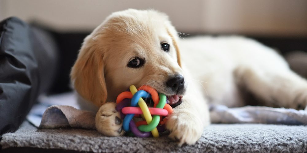 The Best Interactive Dog Toys