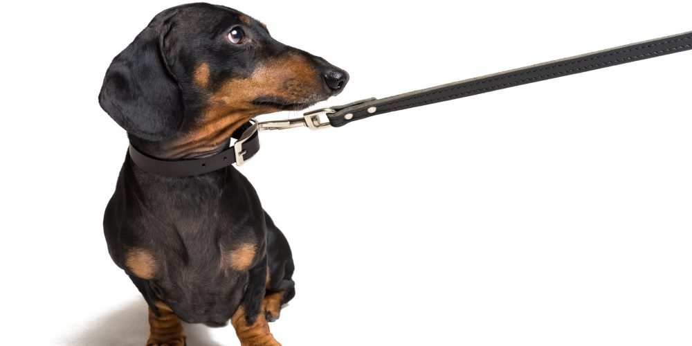 How do I stop my dog pulling on the lead?