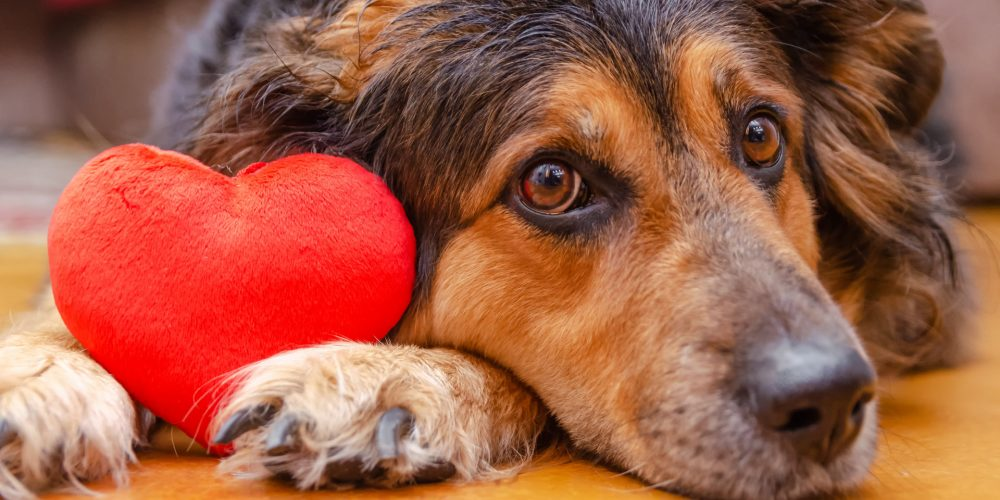 Five ways to celebrate Valentine's Day with your dog