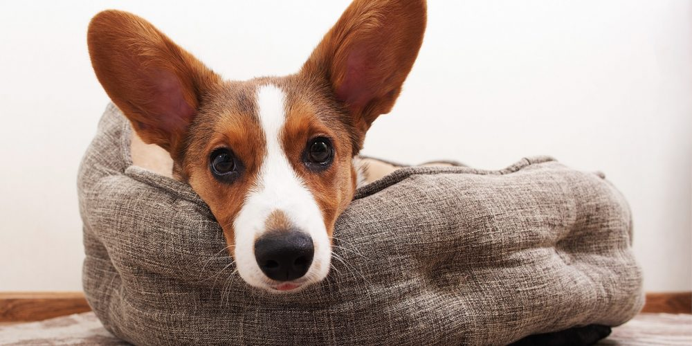 The Best Beds for Puppies