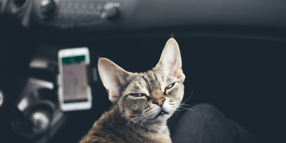 Why should you get your cat microchipped?
