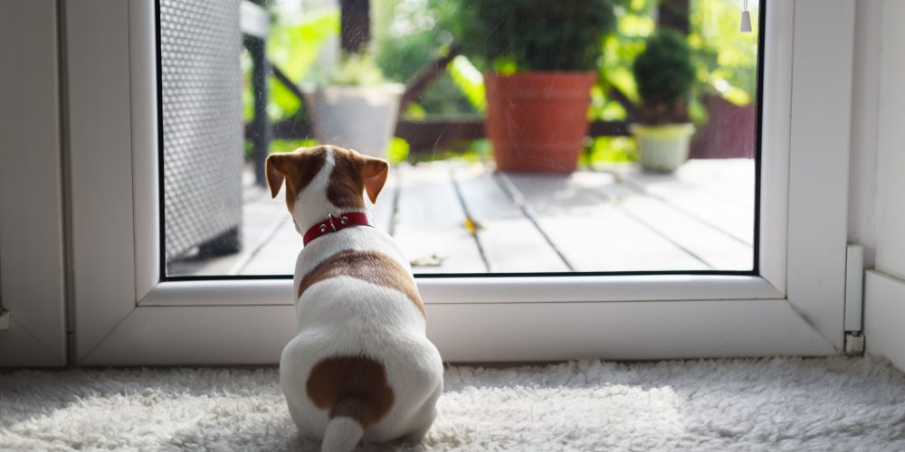 How to train your pup to love house guests
