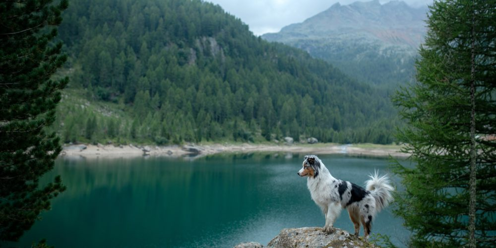 Can I go hiking with my dog?