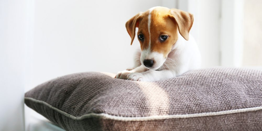 The Best Cushions & Pillows for Dogs