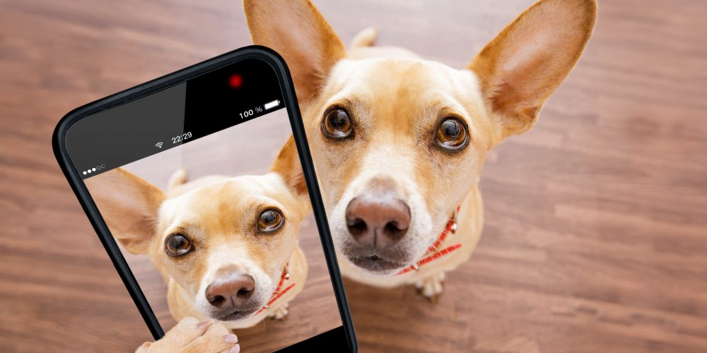 The Best Dog Cameras with Treat Dispensers