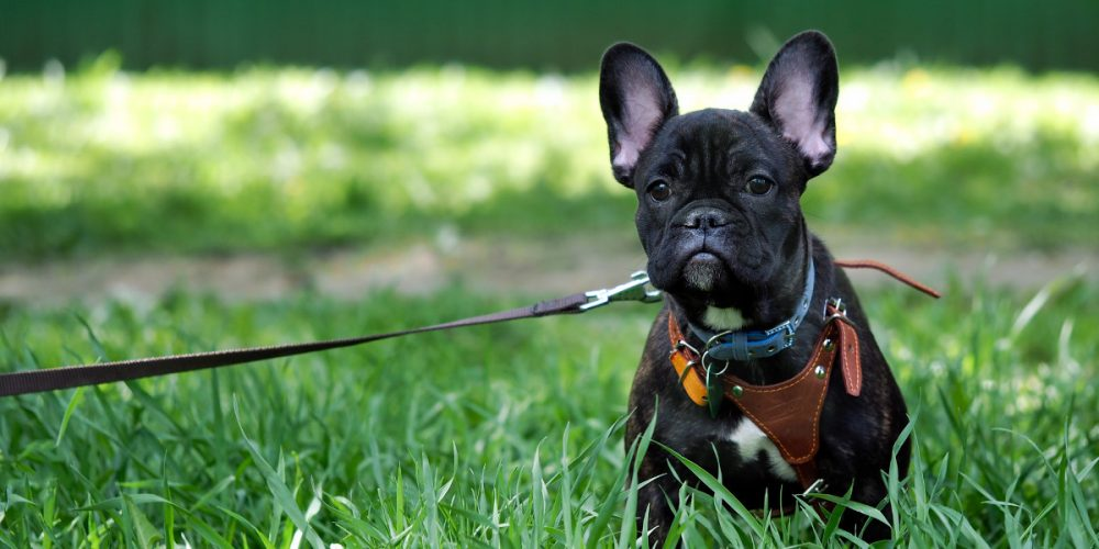 The Best Dog Harnesses