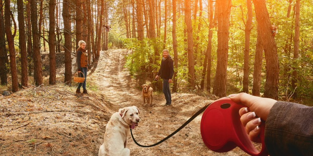 Safety tips for using extendable dog leads