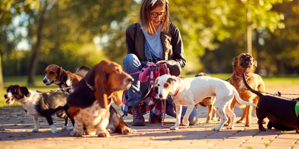 The Best Extendable Dog Leads
