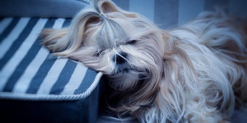 The Best Dog Mattresses
