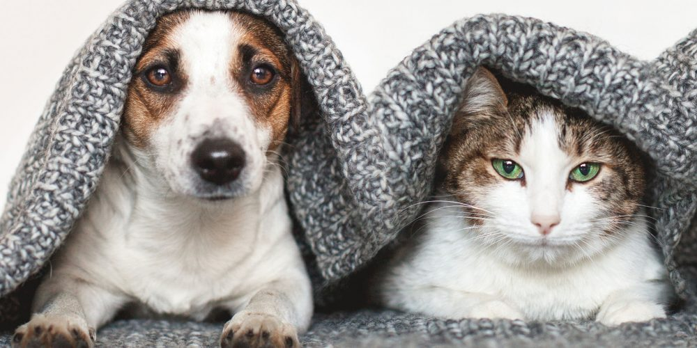 The impact of having a pet on your mental health