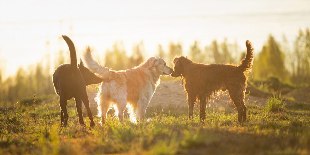 Why do dogs smell everything?