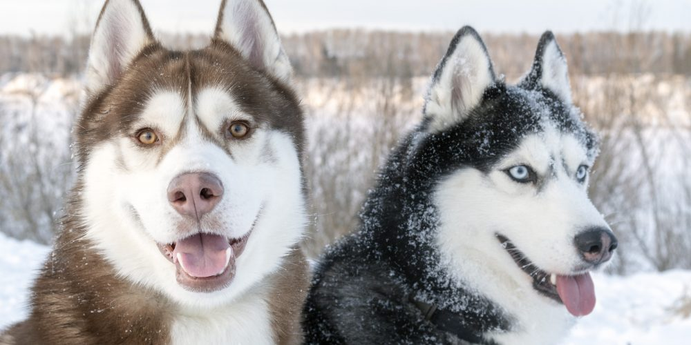 Gio meet Aloy – The relationships between dogs