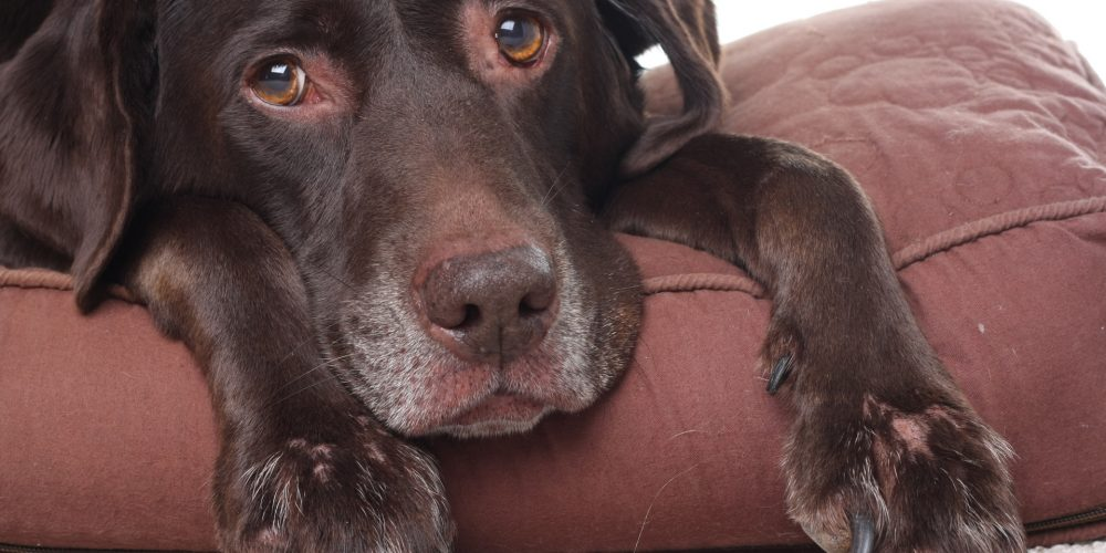 How to naturally treat your dog's arthritis